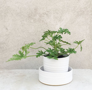 HERB POT small
